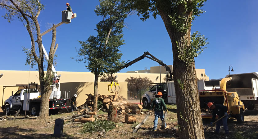 Coates Tree Service, Inc.