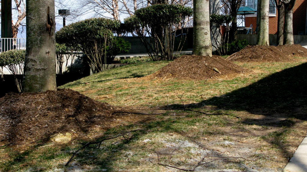 Mistake with Tree Mulching